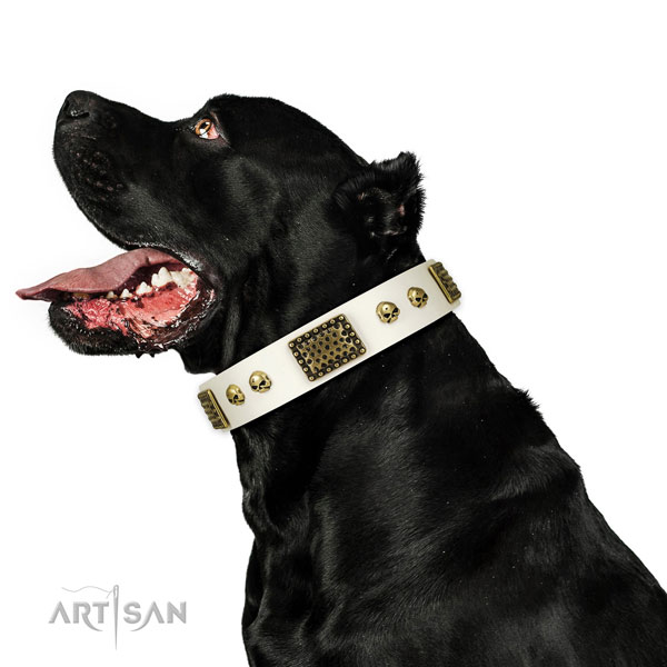 Durable D-ring on leather dog collar for comfy wearing