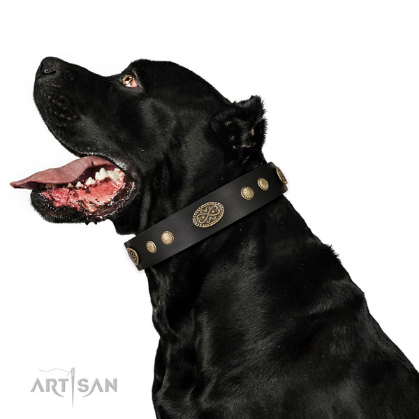 Corrosion proof buckle on full grain leather dog collar for everyday walking