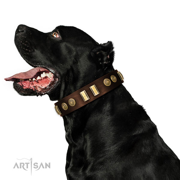 Rust resistant fittings on leather dog collar for daily walking