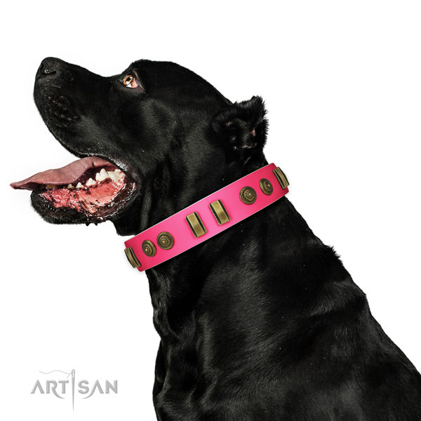 Handy use dog collar of natural leather with awesome embellishments