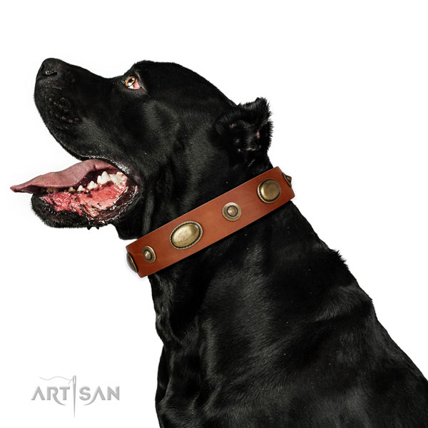 Basic training dog collar of genuine leather with unique adornments