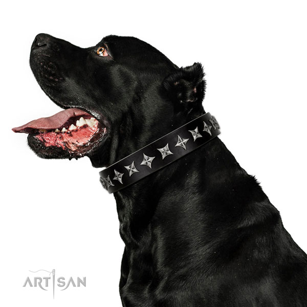 Everyday use decorated dog collar of reliable genuine leather