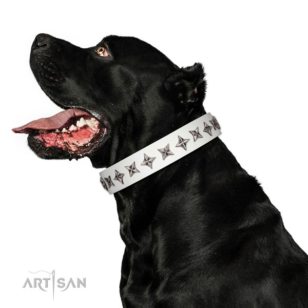 Durable genuine leather dog collar with stylish studs