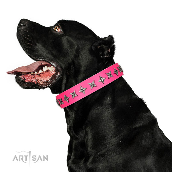 Finest quality full grain genuine leather dog collar with unusual embellishments