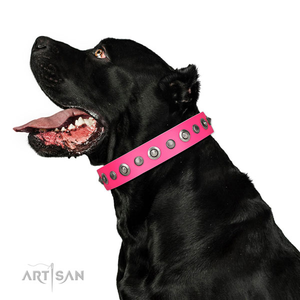 Full grain genuine leather collar with strong traditional buckle for your impressive dog