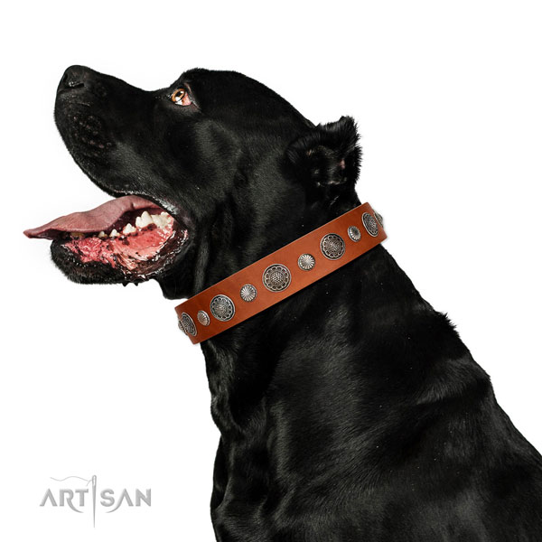 Extraordinary leather dog collar with corrosion proof hardware