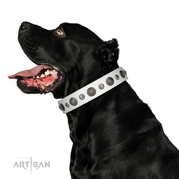 Adorned leather dog collar with rust resistant fittings