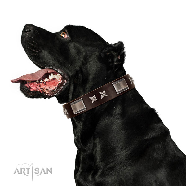 Top notch collar of genuine leather for your beautiful dog