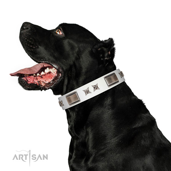 Fashionable collar of natural leather for your attractive four-legged friend