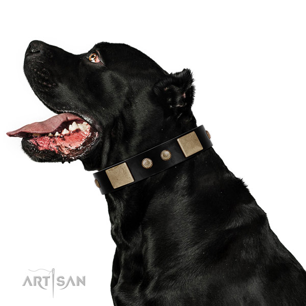 Fine quality full grain leather collar for your lovely pet