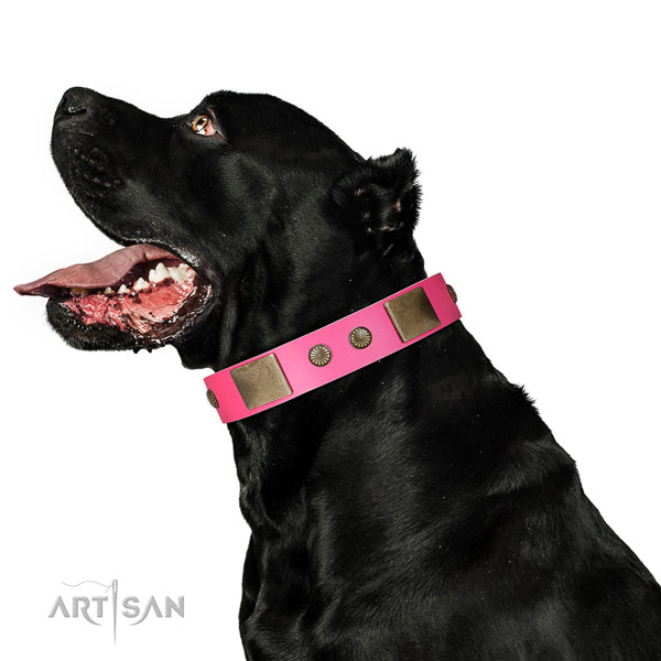 Corrosion resispinkt D-ring on natural leather dog collar for stylish walking