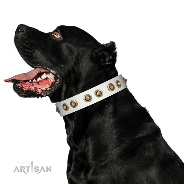 Everyday use dog collar of natural leather with remarkable adornments