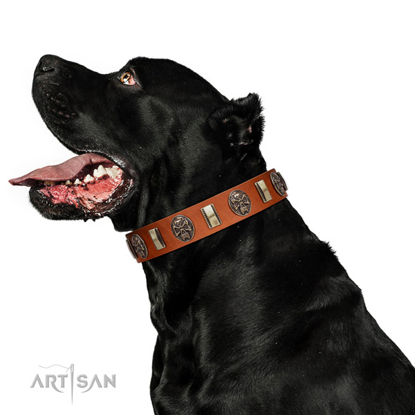 Full grain genuine leather collar with decorations for your handsome dog