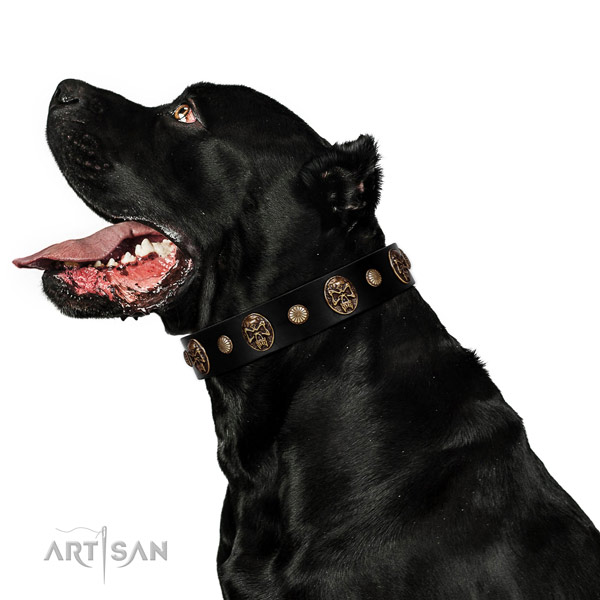 Adorned dog collar crafted for your beautiful doggie