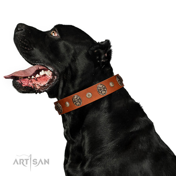Natural leather dog collar with fashionable adornments