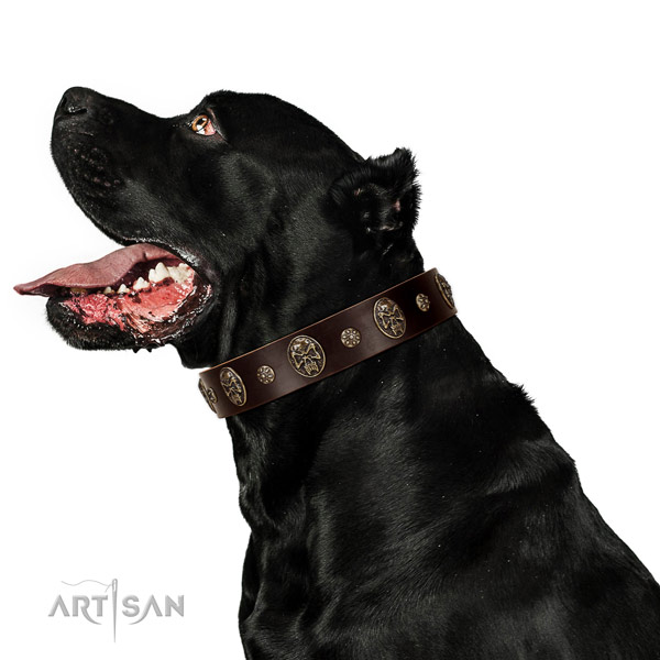 Stylish walking dog collar of leather with incredible studs
