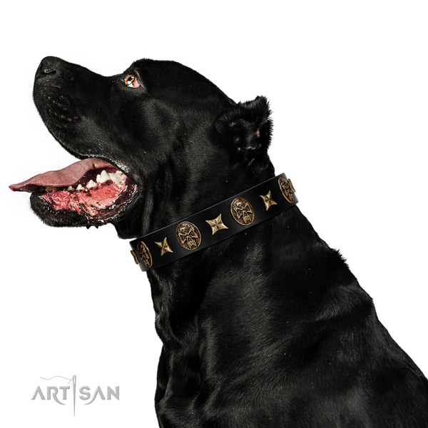 Comfortable wearing dog collar of genuine leather with incredible studs