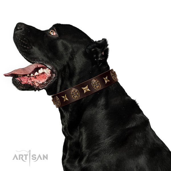 Stylish walking dog collar of genuine leather with remarkable decorations