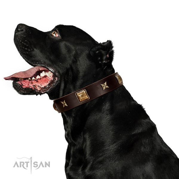 Easy adjustable natural leather dog collar with studs