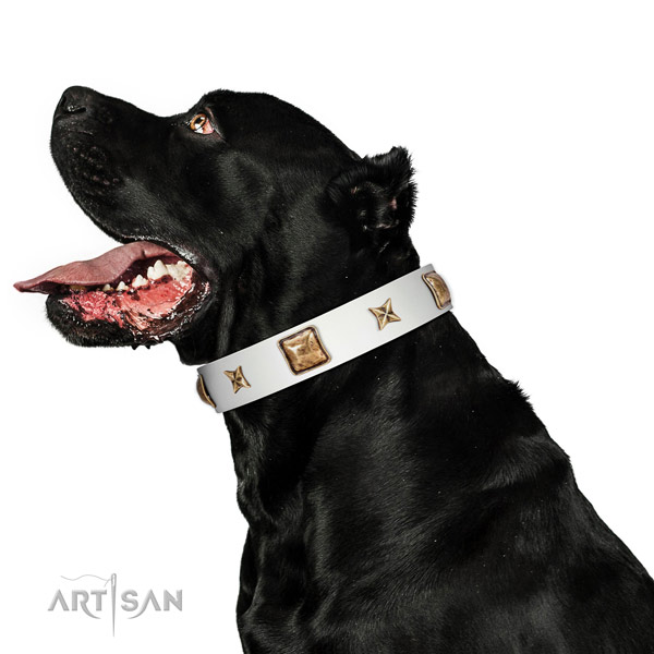 Trendy full grain leather dog collar with studs