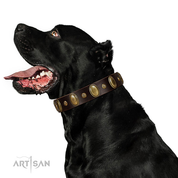Leather dog collar of soft to touch material with extraordinary adornments