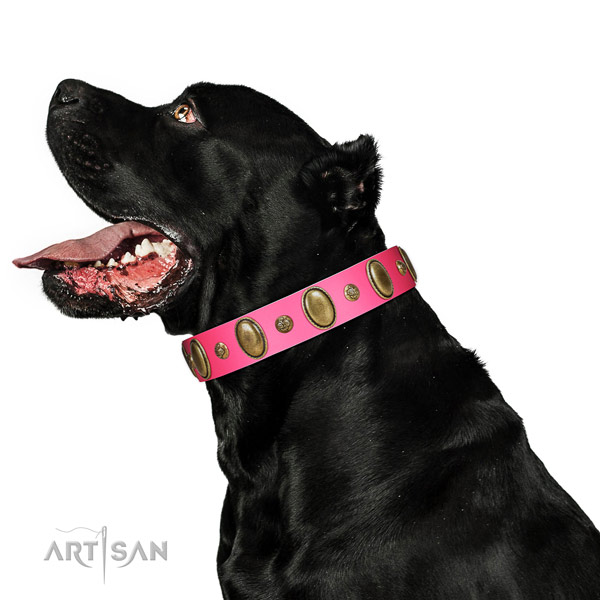 Handy use quality natural genuine leather dog collar with embellishments