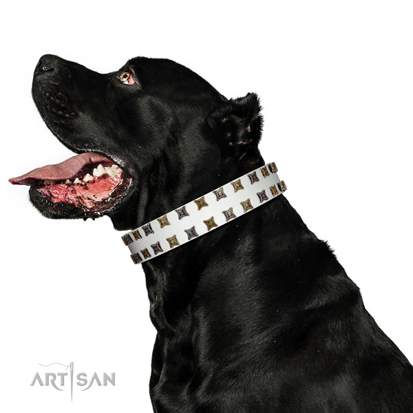 Top notch genuine leather dog collar with embellishments for your doggie