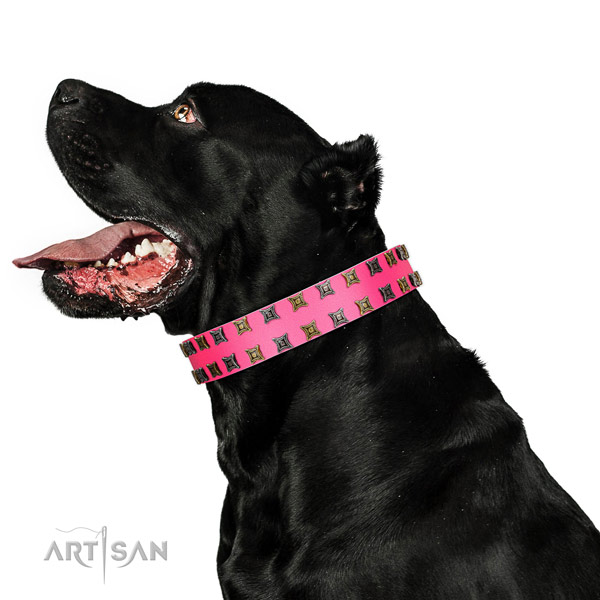 Top notch full grain natural leather dog collar with decorations for your four-legged friend