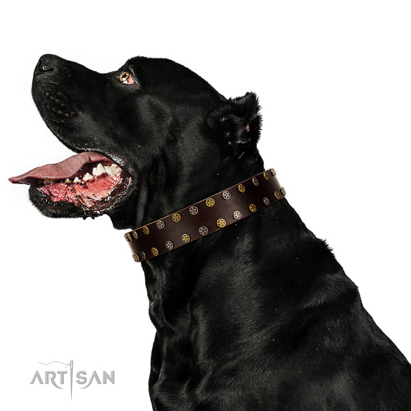 Daily use leather dog collar with decorations