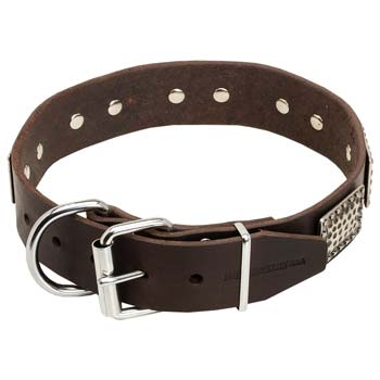 Cane Corso Leather Collar with Easily Adjustable Nickel Buckle