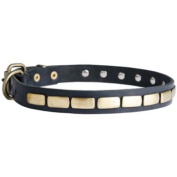 Cane Corso collar for walking in style