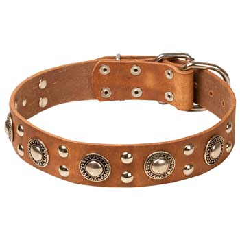 Adorned tan leather Cane Corso collar