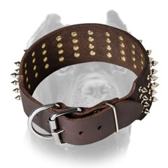 Leather Cane Corso collar with rust-proof hardware