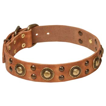Decorated tan leather Cane Corso collar