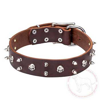 Designer leather Cane Corso collar with awesome decoration