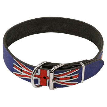 Cane Corso leather collar with nickel plated steel