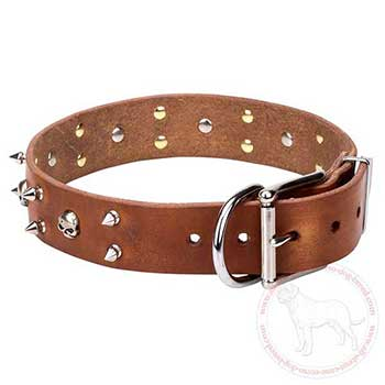 Leather Cane Corso collar adorned with skulls and spikes