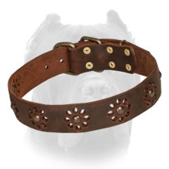Swell Cane Corso leather collar