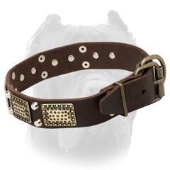 Leather Cane Corso collar with tough brass fittings