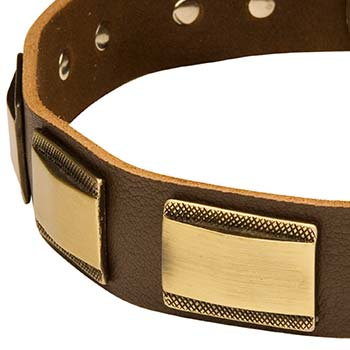Cane Corso Collar Leather with Gold-like Decoration