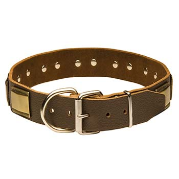 Cane Corso Leather Collar with Rust Resistant Hardware