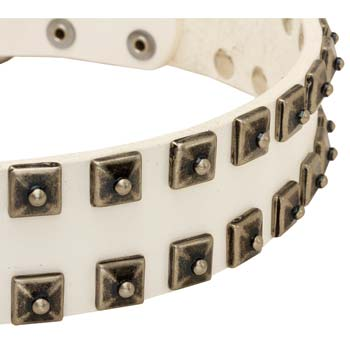 White Cane Corso collar whiteleather with nickel studs