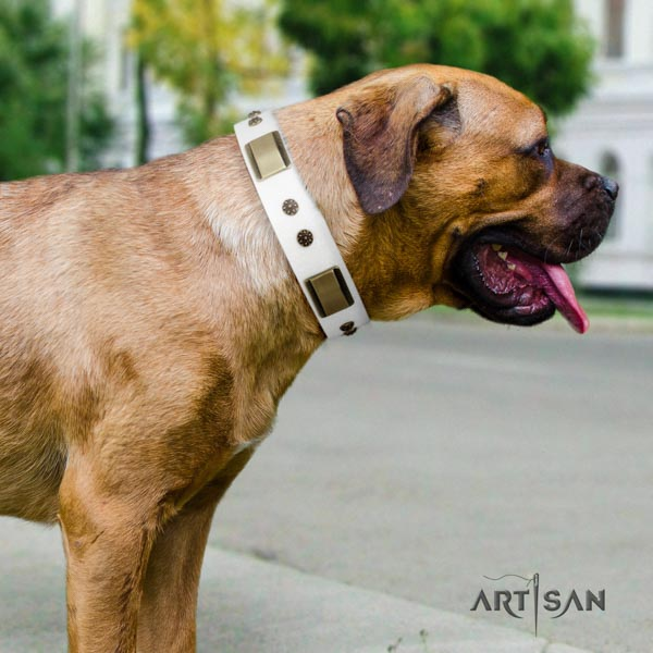 Cane Corso studded collar made of strong natural genuine leather