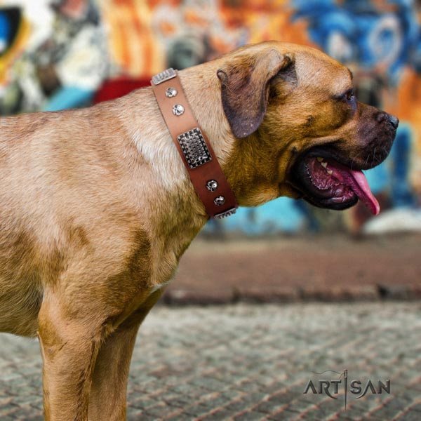 Cane Corso adorned collar made of strong full grain natural leather