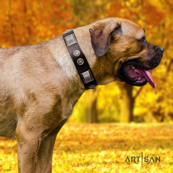 Cane Corso natural genuine leather collar with reliable fittings