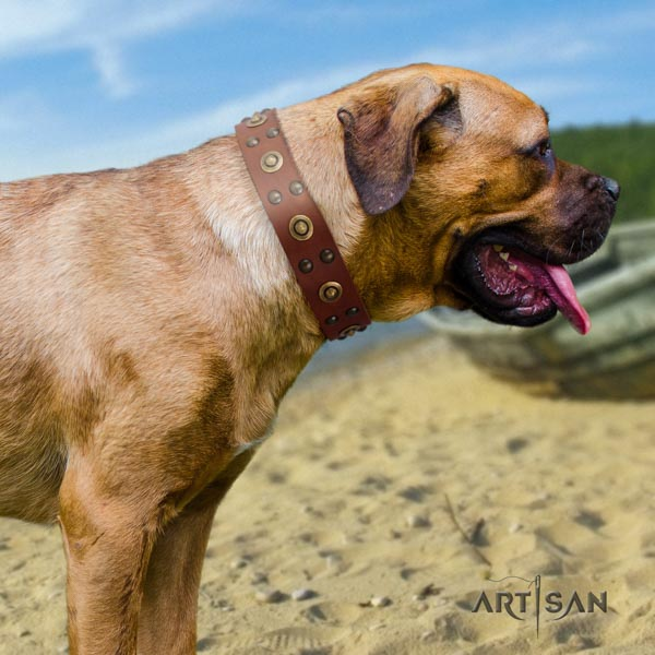 Cane Corso adorned collar made of durable genuine leather