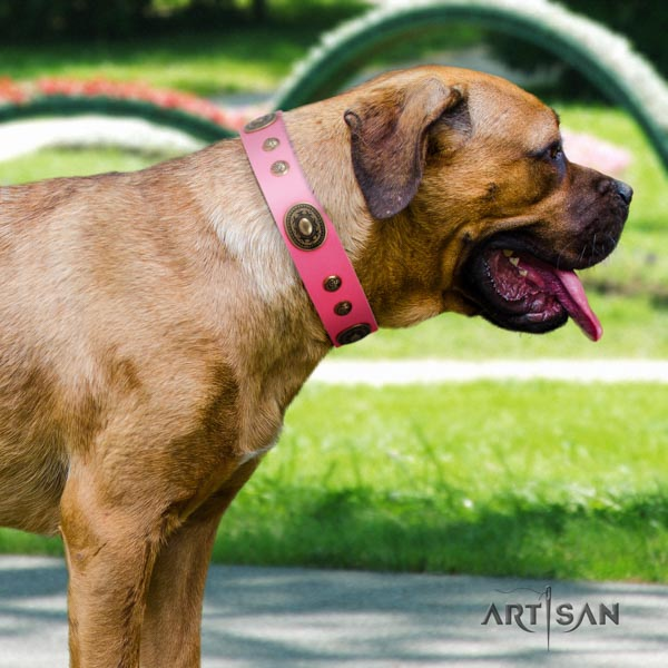 Cane Corso embellished collar made of durable full grain leather