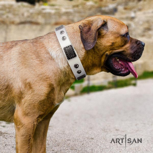 Cane Corso studded collar made of top rate natural genuine leather