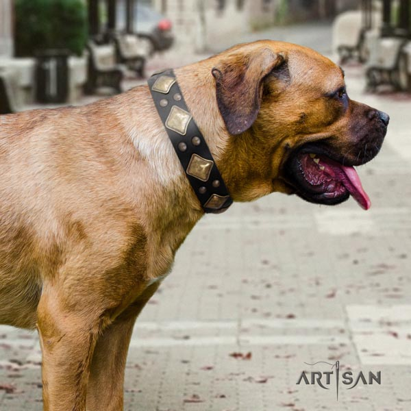 Cane Corso embellished collar made of top rate full grain natural leather
