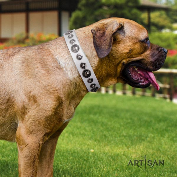 Cane Corso high quality embellished full grain genuine leather collar